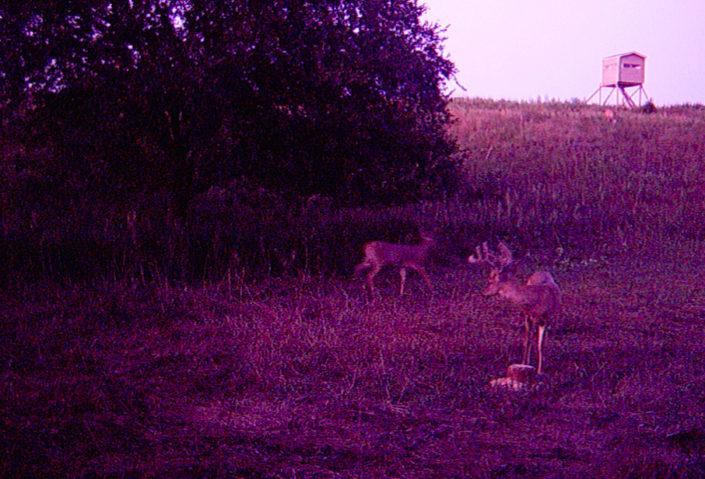 Great Deer Hunting in Eustis Nebraska